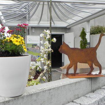 Katze Wintergarten